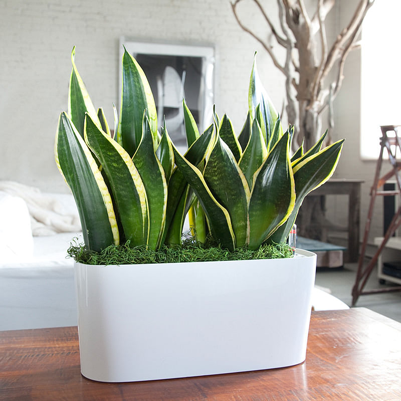 14 plants that are alternatives to air purifiers home