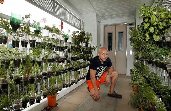 Diy herb garden in hdb corridor home decor singapore for Home garden design singapore