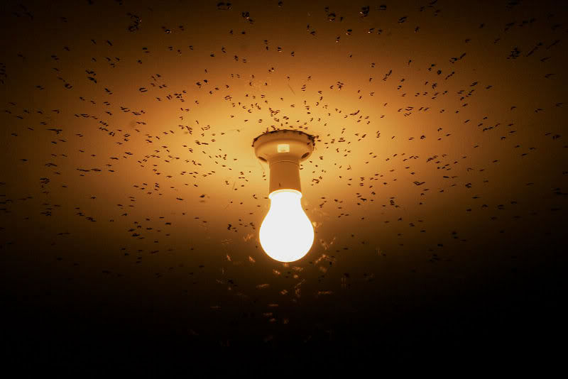 Get rid of flying insects attracted to lights in your home