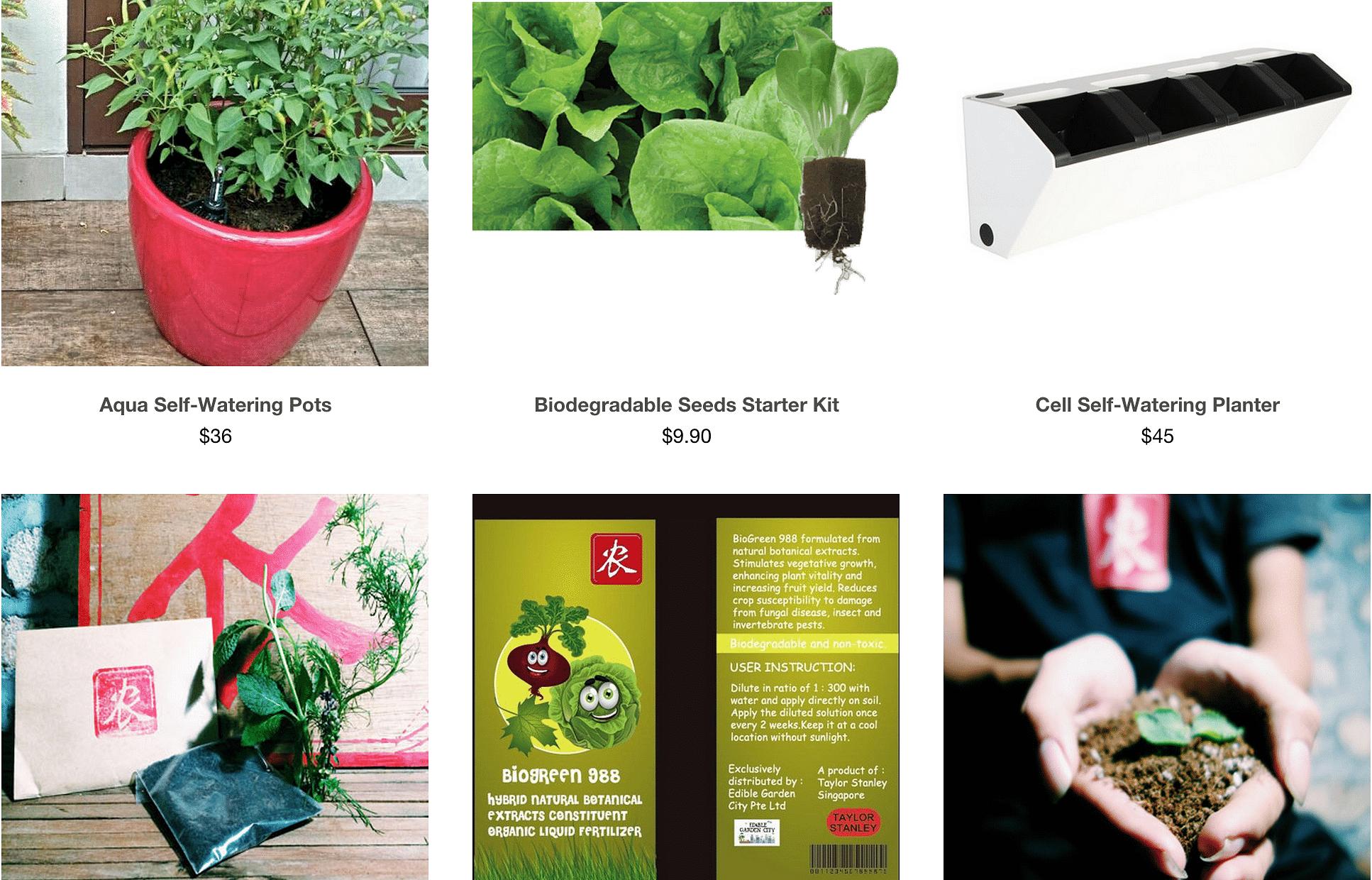 Live Indoor Plants Live Indoor Plant Rental And Service