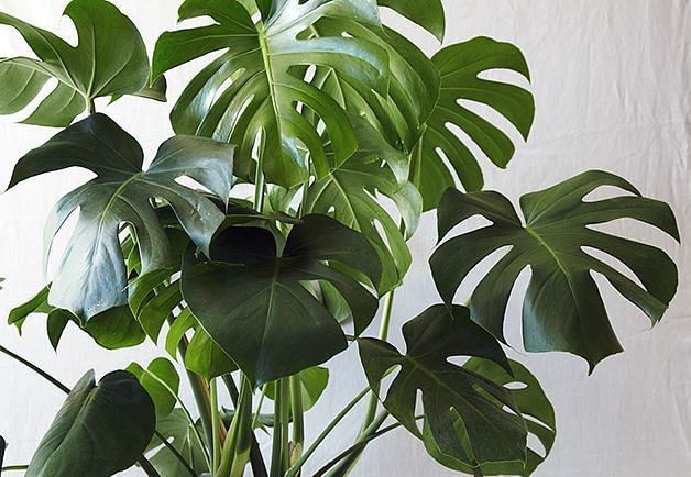 Easy to care for plants for busy homeowners part 1 for Low maintenance tropical plants