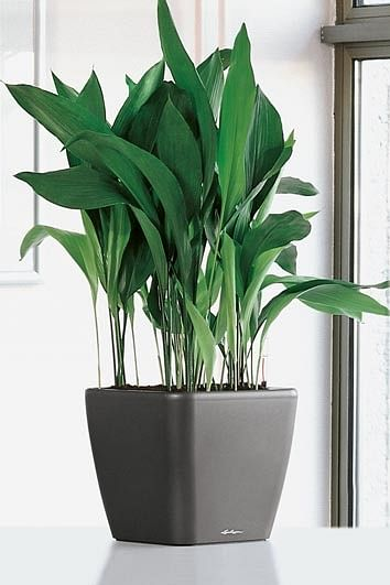 Easy-to-care-for plants for busy homeowners (Part 1) | Home & Decor ...