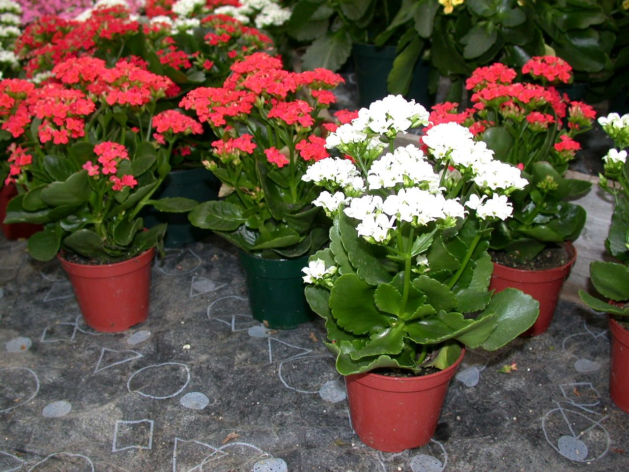 Easy-to-care-for plants for busy homeowners (Part 1) Home & Decor Singapore