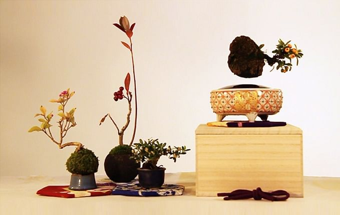 Add greenery in your home with this plant that levitates and spins!