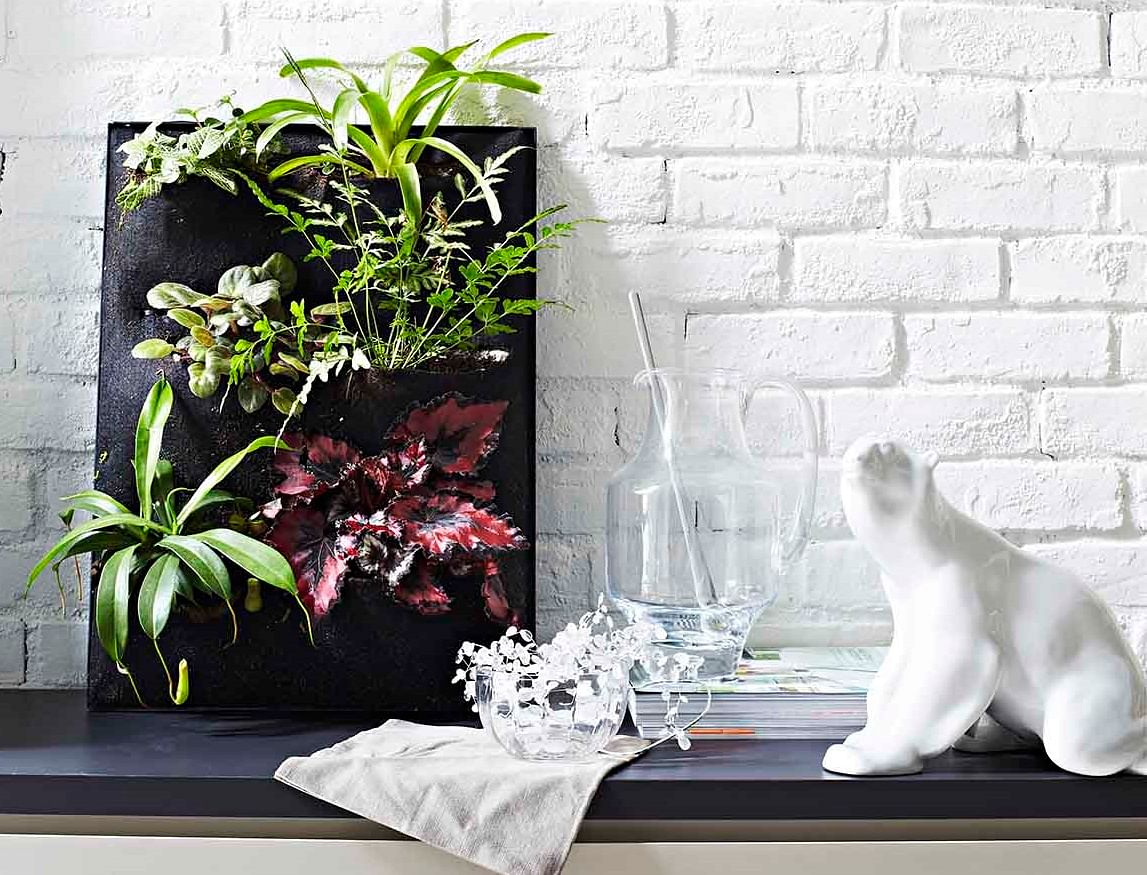 9 Unique Ideas To Display Indoor Plants