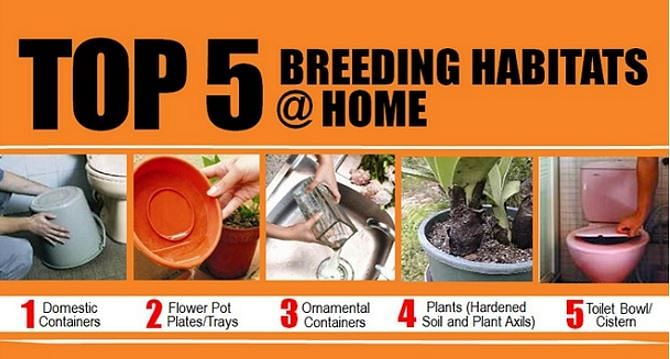 How To Prevent Mosquitos From Breeding In Your Home Home