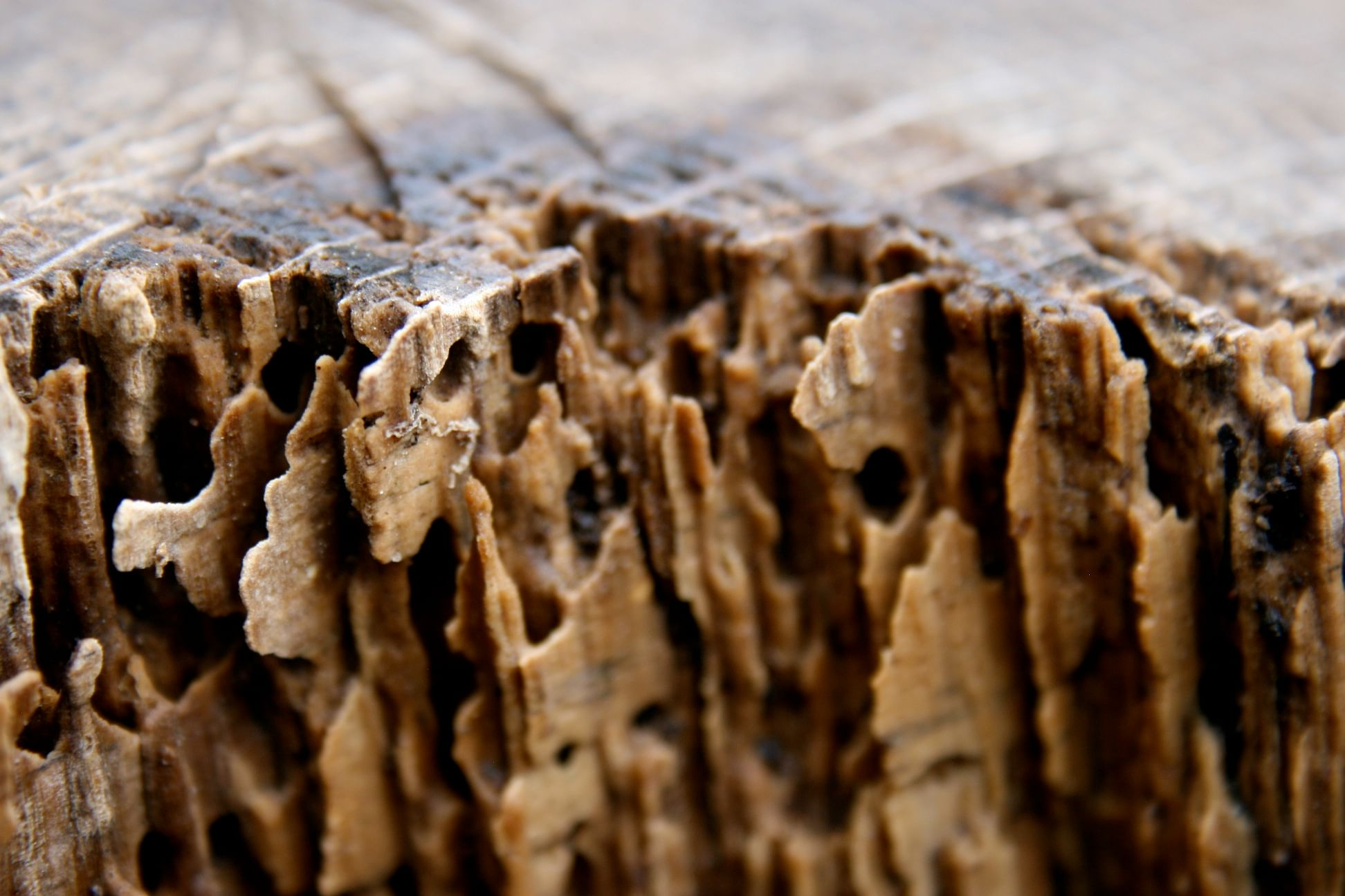Termites At Home Warning Signs And Prevention Methods