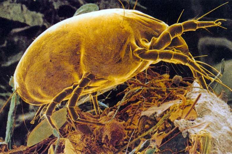 6 things you need to know about dust mites