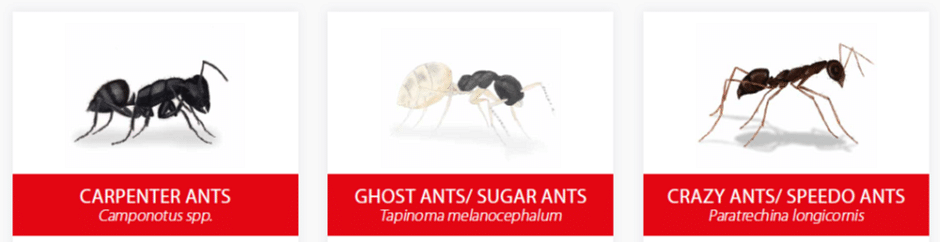 how to keep sugar ants away