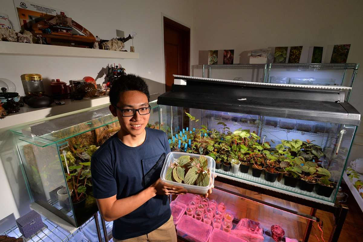 Gardens In Hdb Flat Bedrooms Read The Stories Of Plant