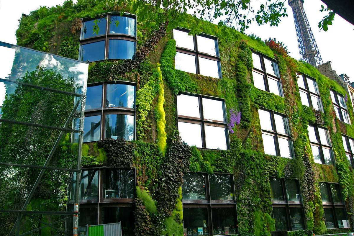 Advice For Creating A Healthy And Beautiful Green Wall