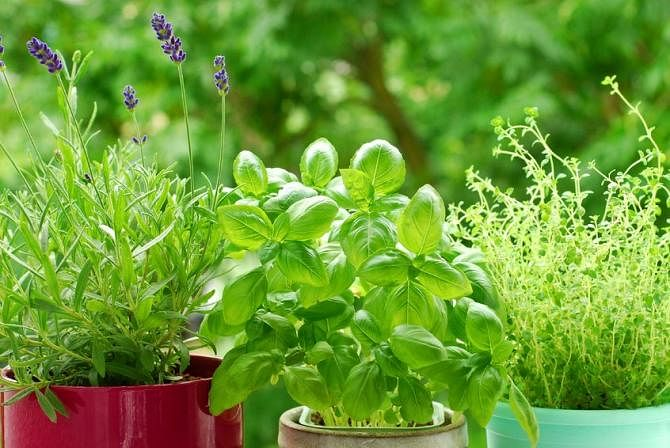 Indoor Garden Pests How to get rid of bugs in your indoor and outdoor gardens the and a concentration of edible plants such as your outdoor or indoor garden is like a smorgasbord buffet for some of the most annoying garden pests workwithnaturefo