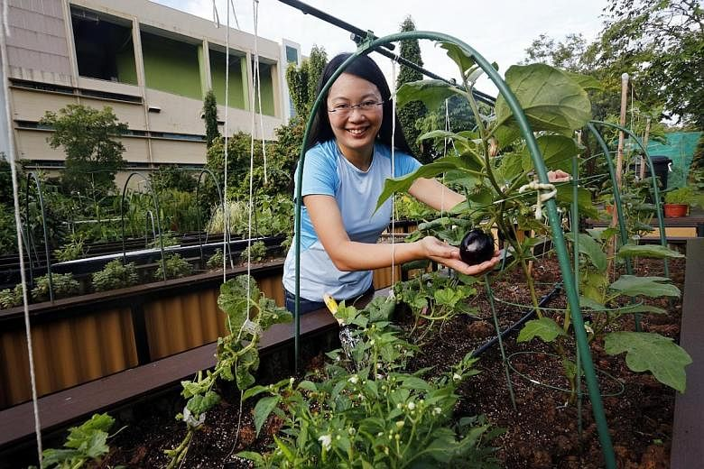 Urban Farming Takes Root In Singapore Home Amp Decor Singapore