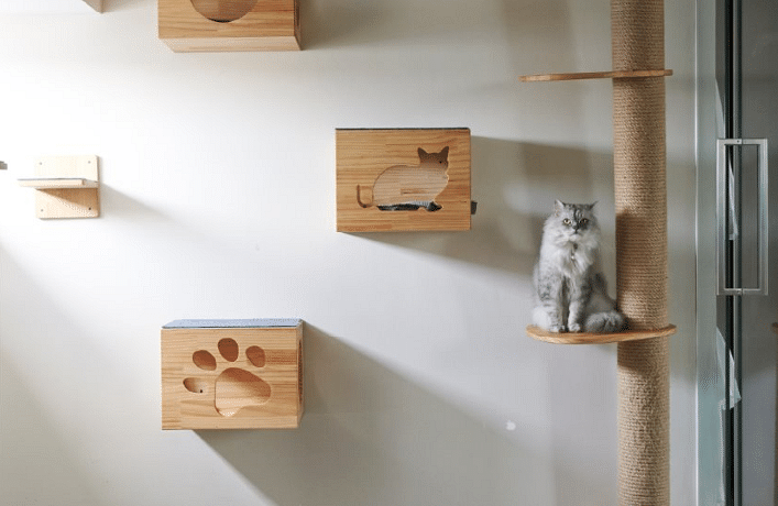 Tips on designing a pet-friendly home | Home & Decor Singapore