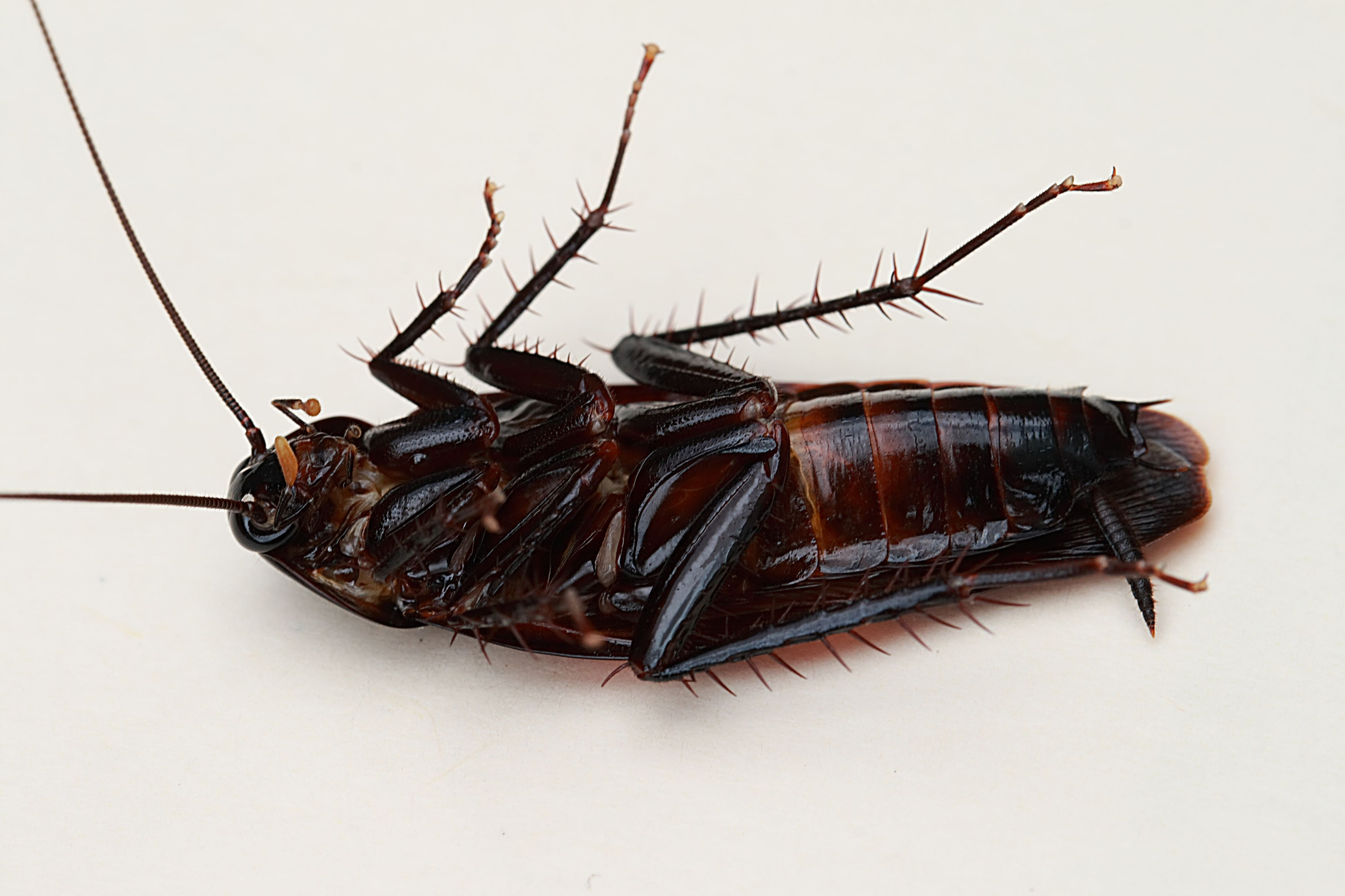 """""""In the wards there were cockroaches, there were sometimes cockroaches in food"""" 62"""