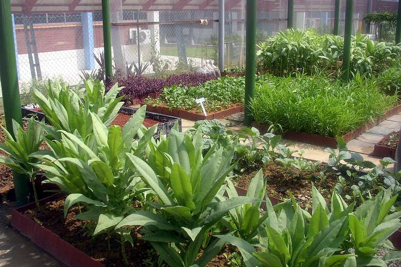 Edible Garden Urban Farming