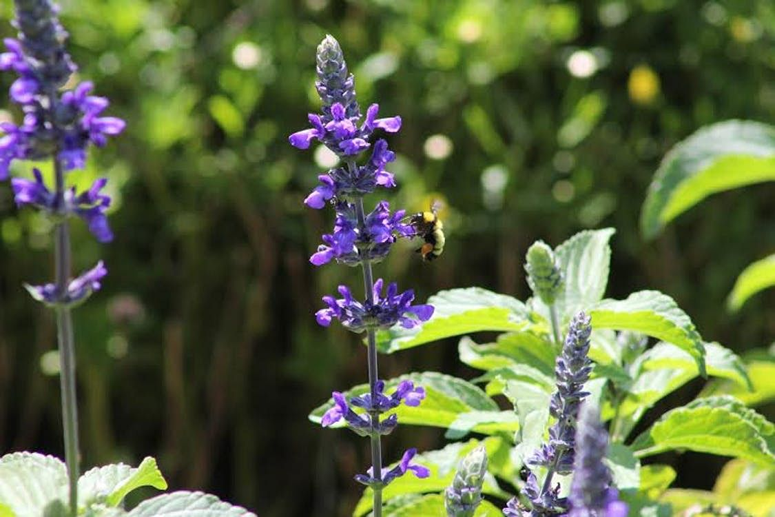 Plant Care Tips How To Grow Lavender In Singapore Home