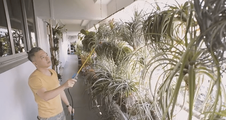 This Air Plant Artisan Decorates His Home With Hundreds Of