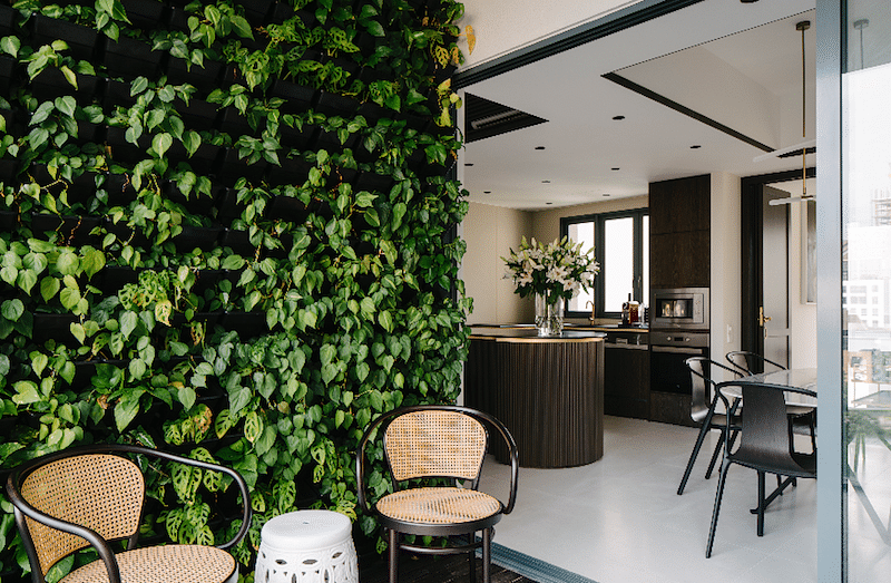Top 5 Indoor Plants For Singapore Home Decor Singapore