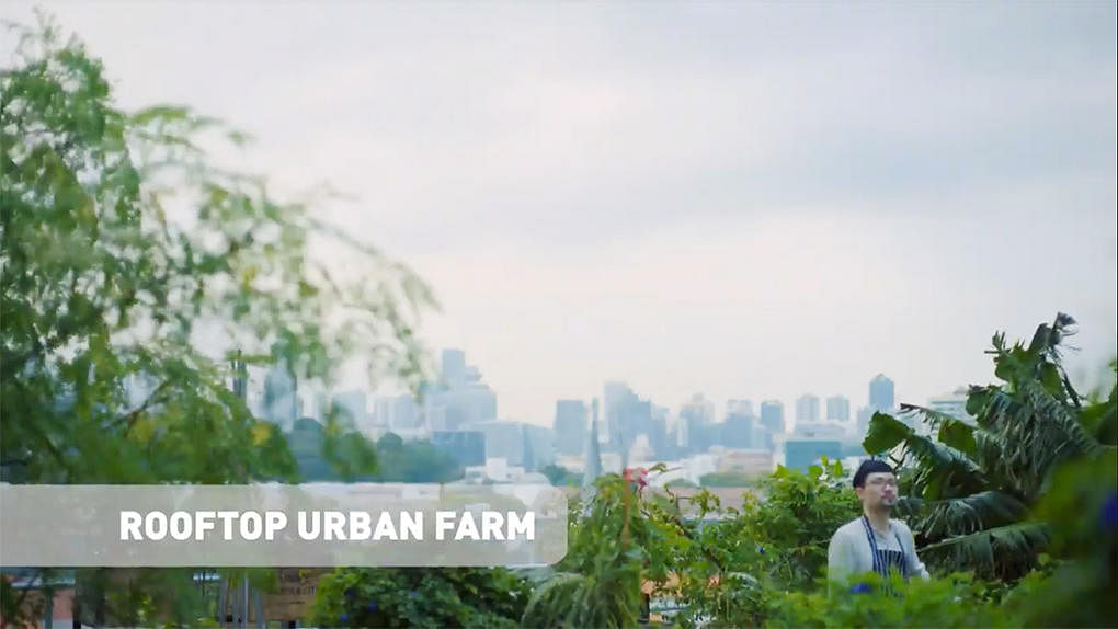 04 new funan mall rooftop urban farm