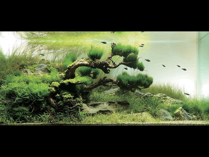 10 Stunning Planted Tank Set Ups That Will Make You Want To Start An Aquarium Home Amp Decor