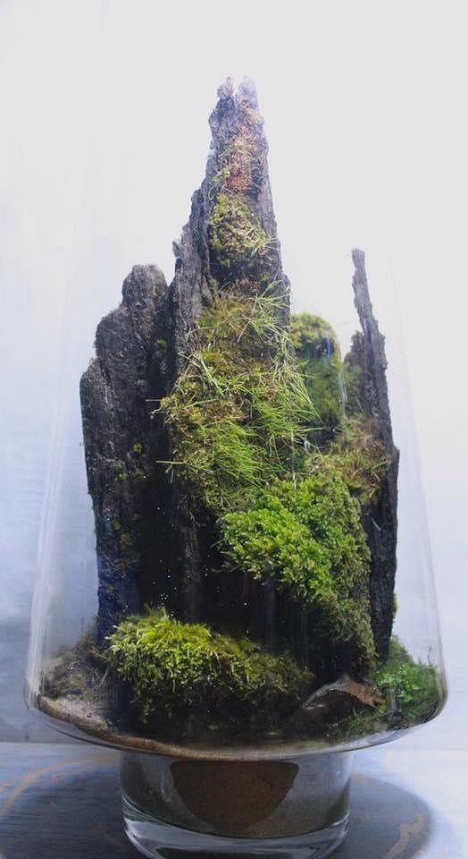 Inspiration 15 Amazing Terrarium Ideas With Moss Ferns