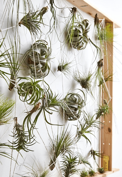 Airplants board
