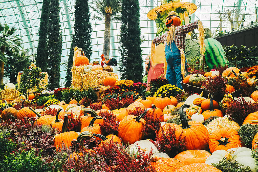 Autumn Harvest Display @ Gardens by the Bay