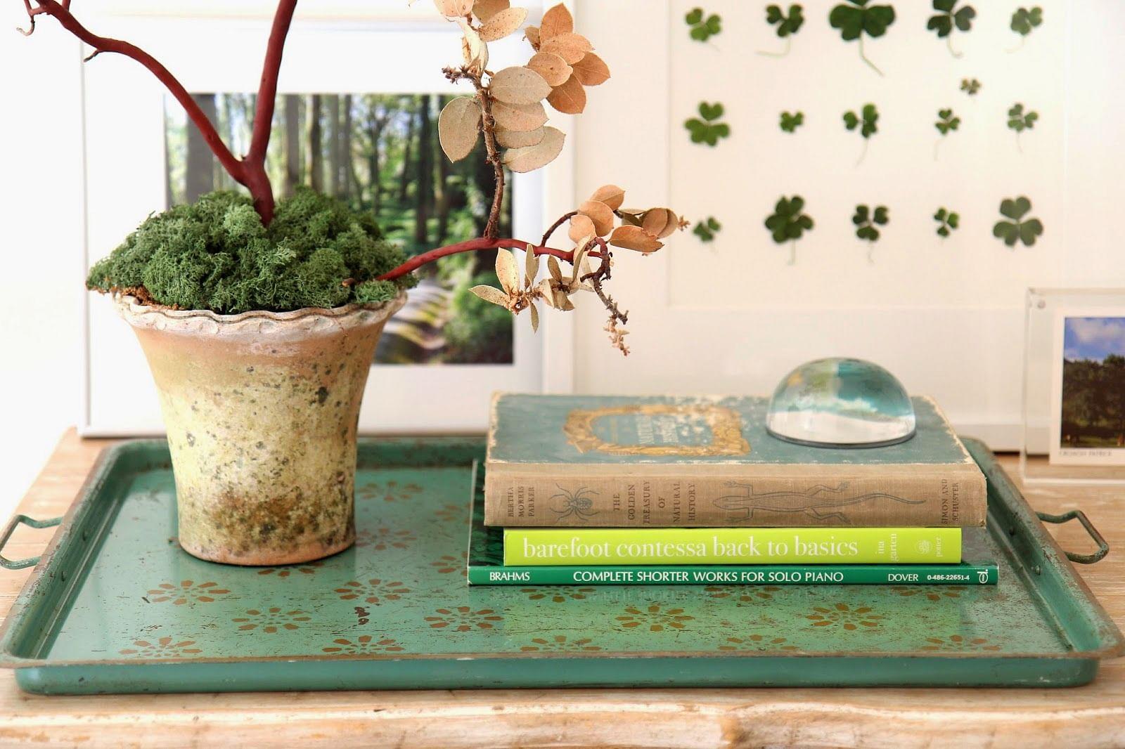 vignette, books, plants