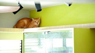 42662-creature-comforts-four-room-hdb-bto-flat