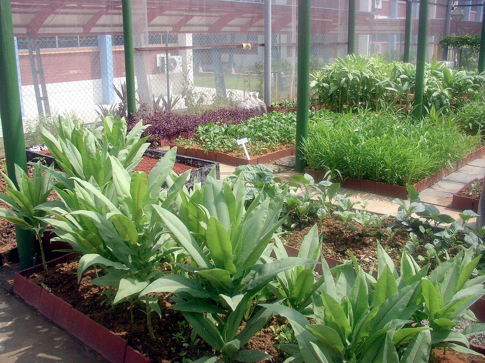 edible garden urban farming