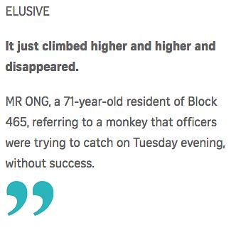 bukit panjang monkey