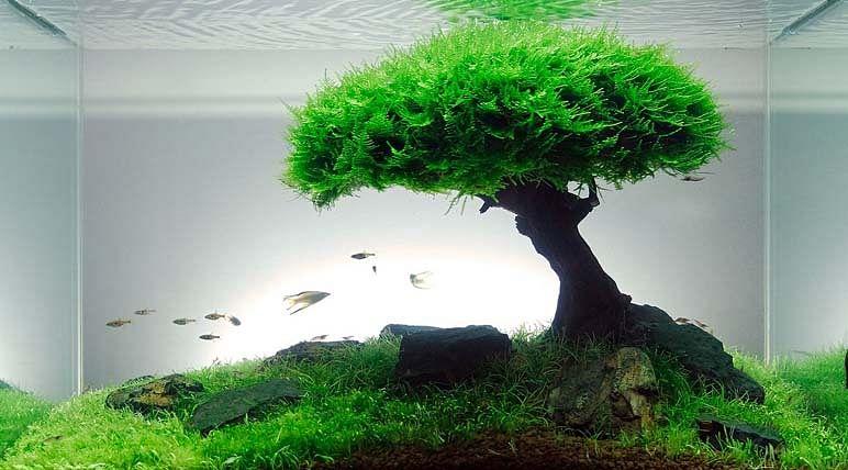Aquascape Japanese Aquarium