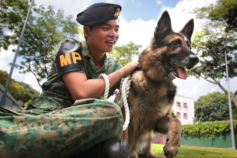 HDB homeowners are now permitted to adopt former military police sniffer dogs. Photo: The New Paper