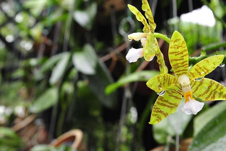 orchid care and plant tips