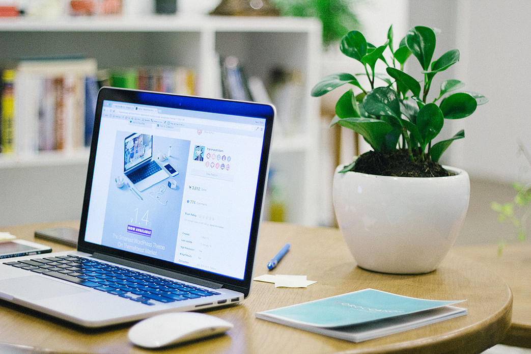 small potted plant on desk with laptop