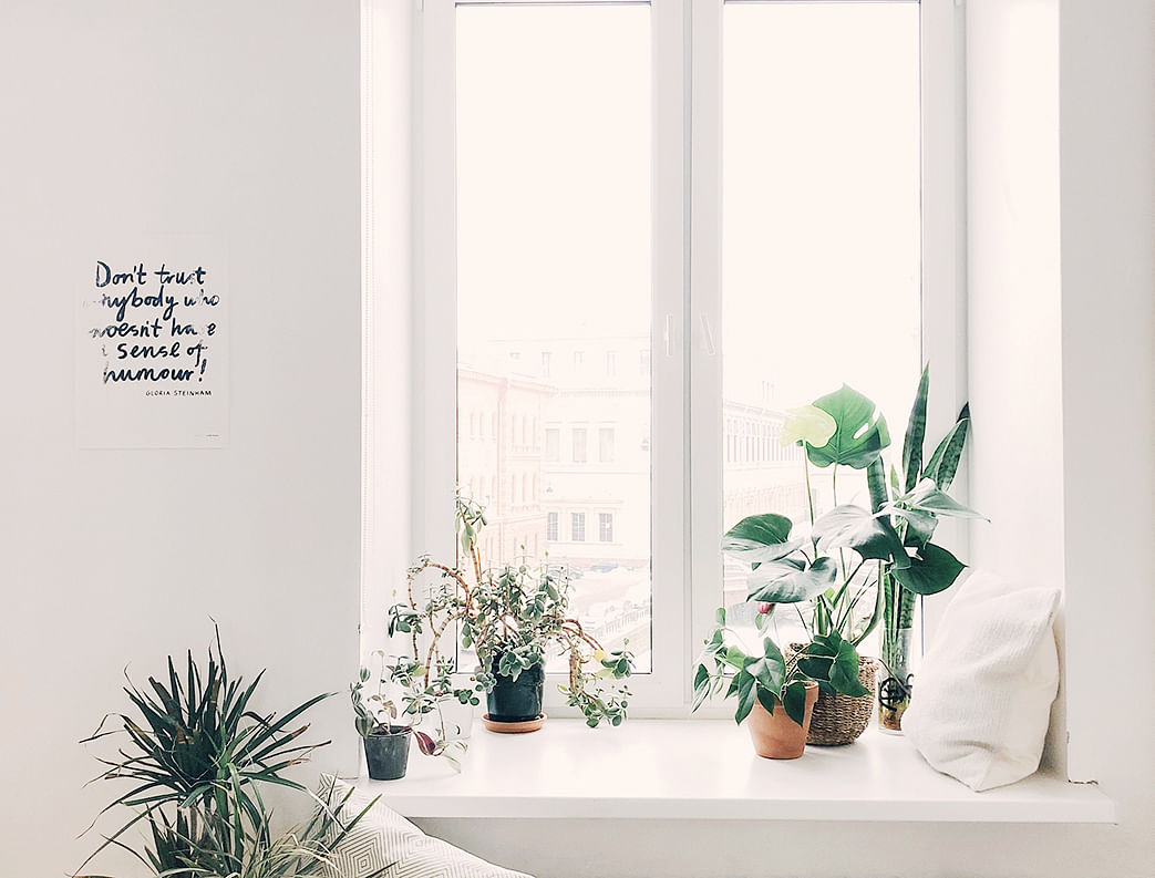 several potted plants on window sill bedroom