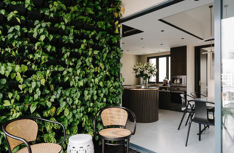 singapore house plants