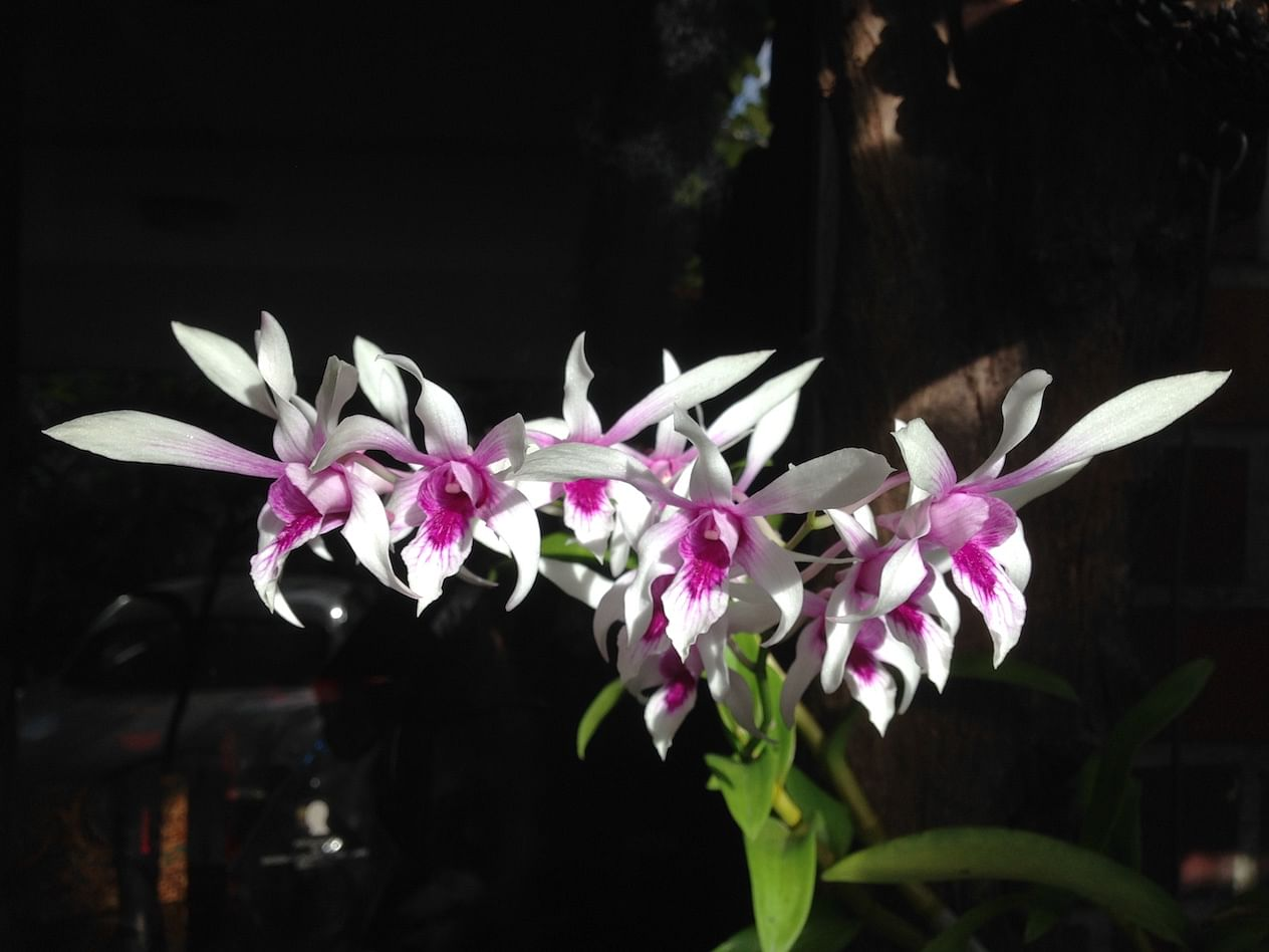 10 Expert Tips To Grow And Care For Your Orchids Home Decor
